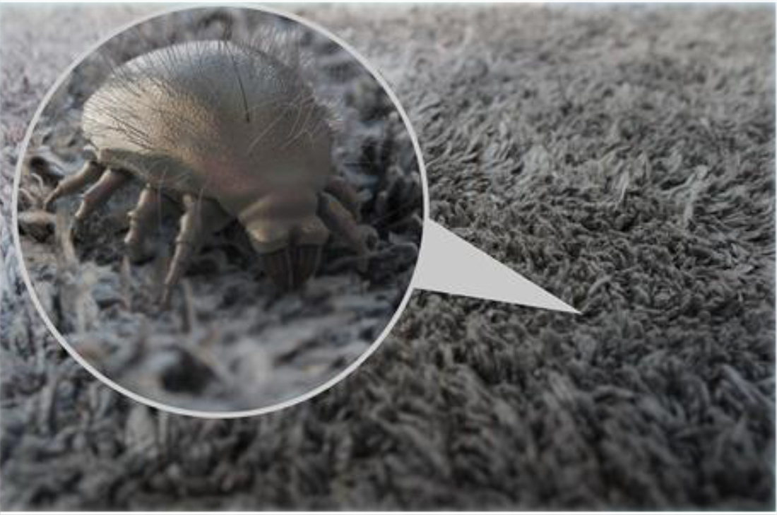 House dust mite avoidance